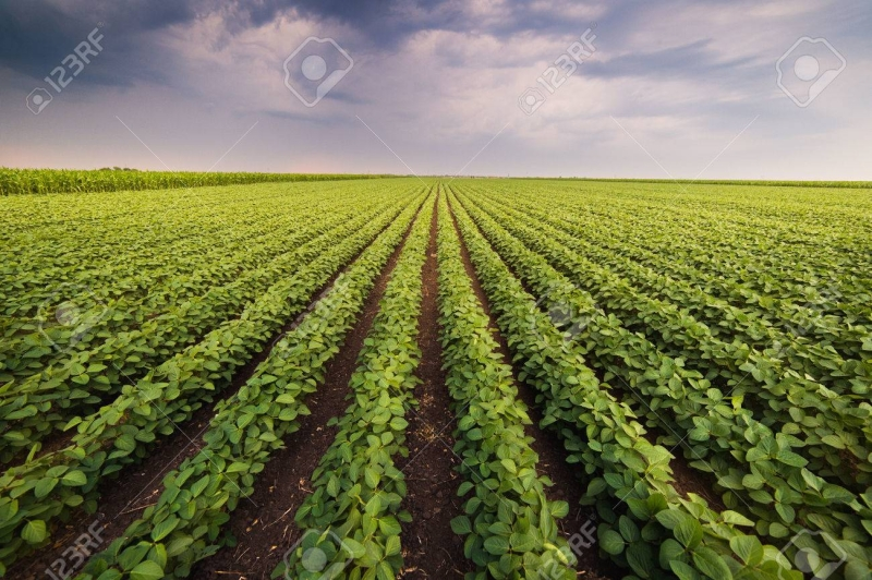 Can Russia's Far East Feed China With Soy?